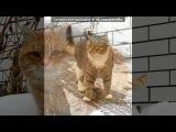 «котики» под музыку Диджей Смеш - я волна. Picrolla